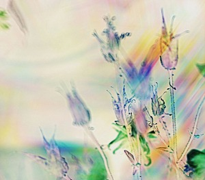 "Judith Mont ""Dreamscape"""