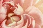 "Kate Wilson ""Blossom"""