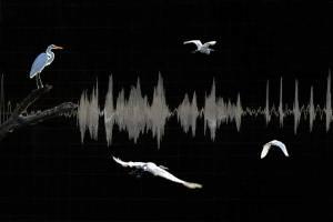 """Ruth Clegg """"Sound Waves"""""""